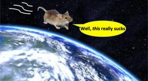 mouse-orbit
